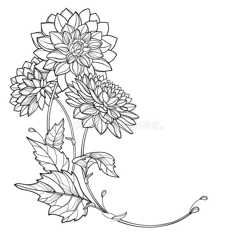 Vector corner bouquet with outline Dahlia or Dalia flower and leaf in black isolated on white background. Bunch of contour Dahlia. royalty free illustration