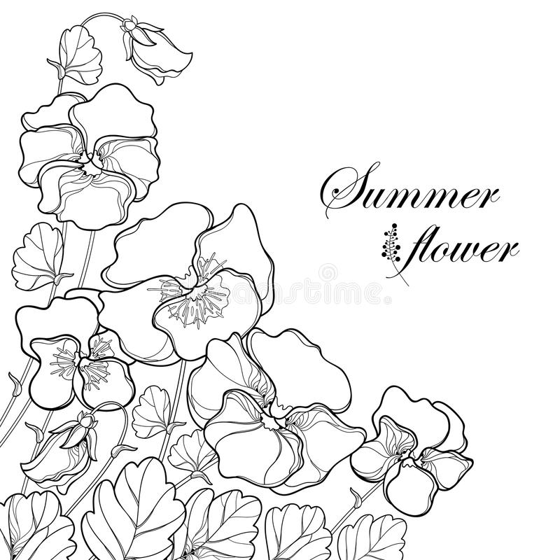 Vector corner bouquet with outline Pansy or Heartsease or Viola tricolor flower and leaf in black isolated on white background. stock illustration