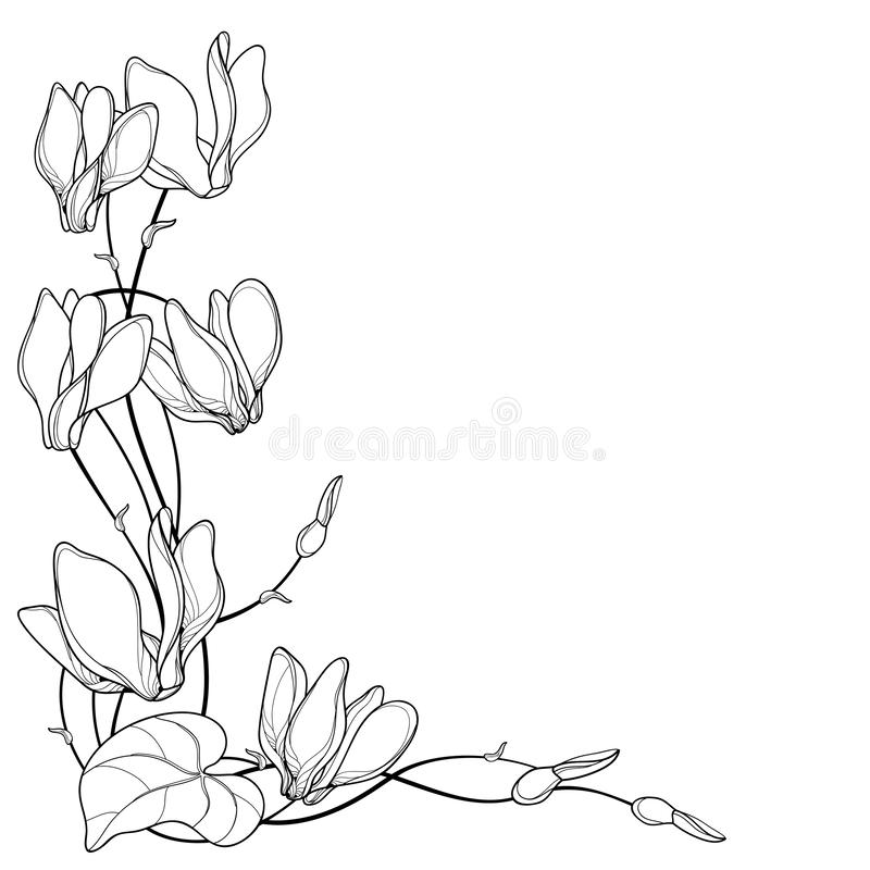 Free Vector Corner Bouquet With Outline Cyclamen Or Alpine Violet Bunch, Bud And Leaf In Black Isolated On White Background. Royalty Free Stock Image - 139406456