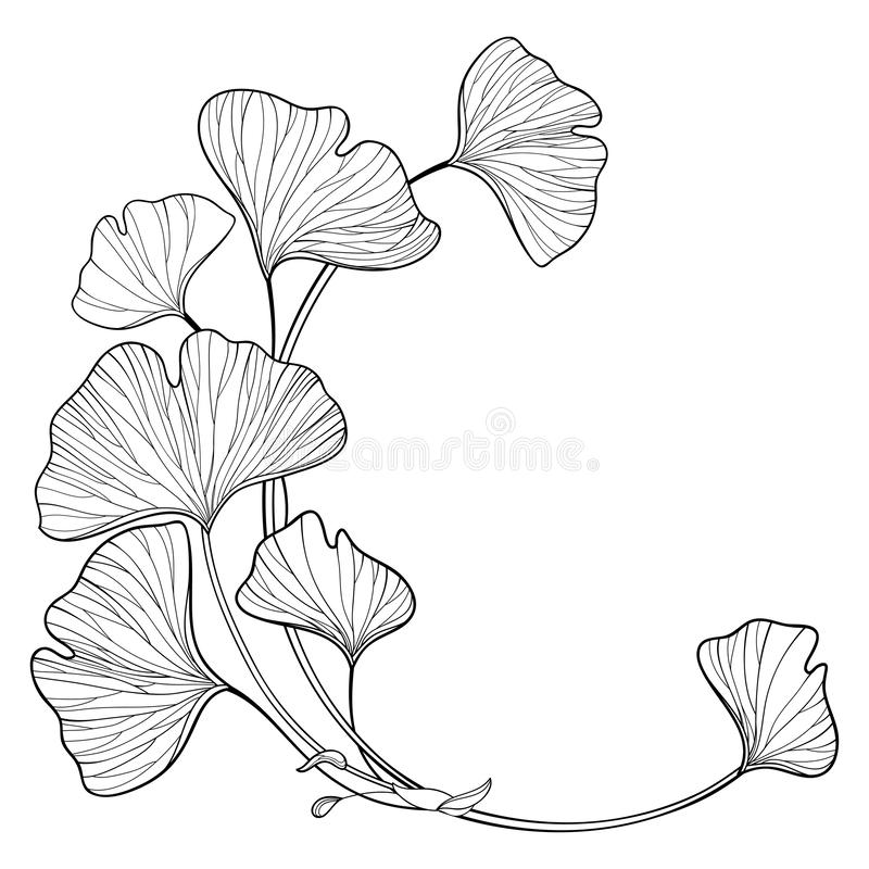 Free Vector Corner Branch With Outline Gingko Or Ginkgo Biloba Tree. Round Bunch With Ornate Leaf In Black Isolated On White Background Stock Photo - 166616240