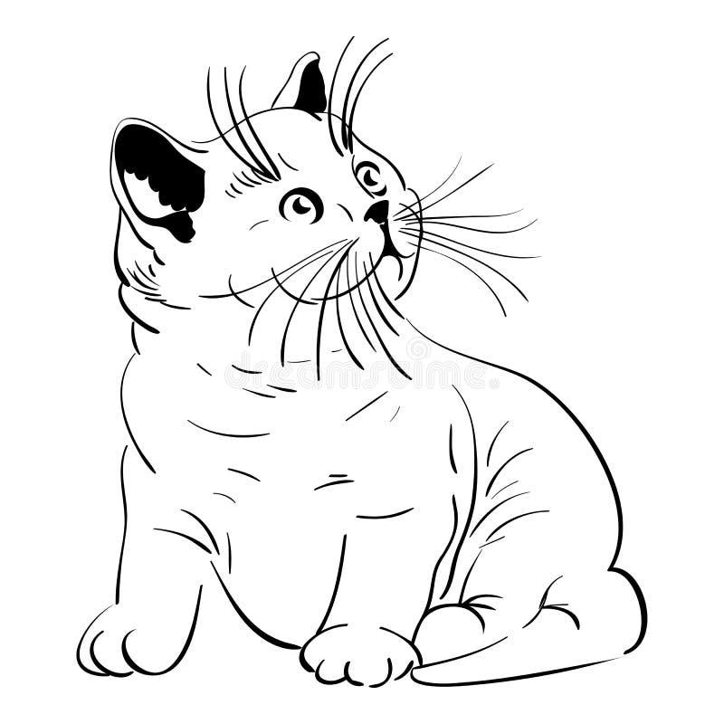 Vector Cute little fluffy kitten British stock image