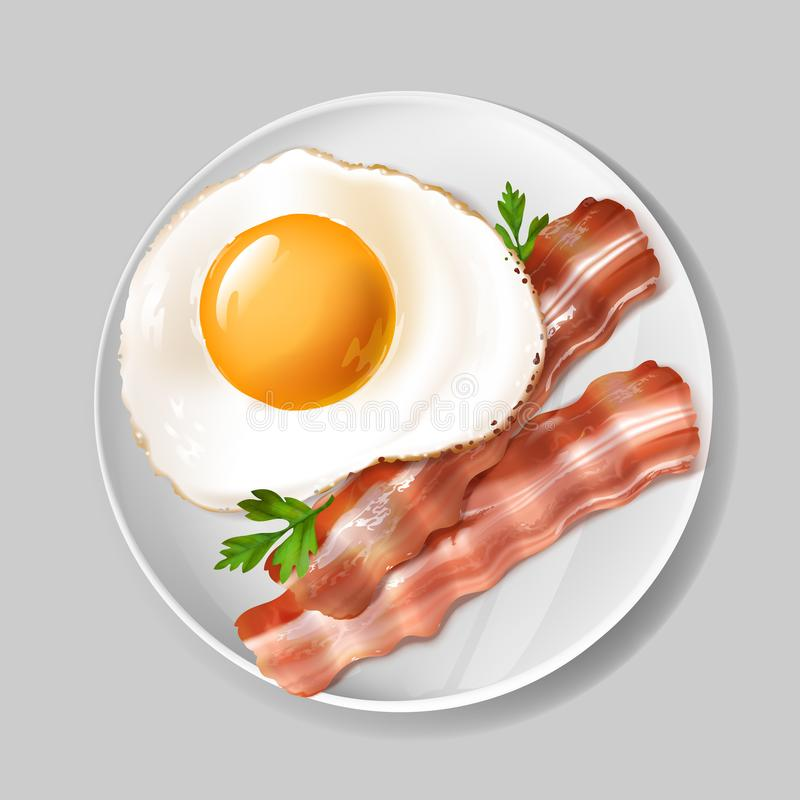 Vector 3d realistic english breakfast - bacon, egg. Vector 3d realistic english breakfast - tasty bacon, fried egg with green parsley on white plate. Delicious royalty free illustration