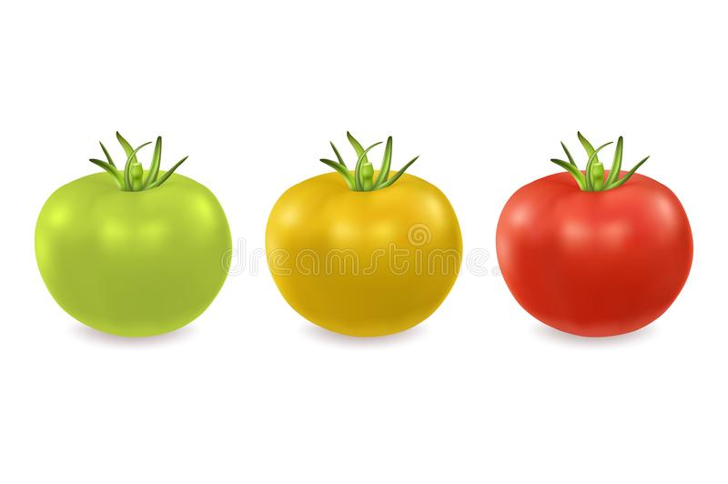 Vector 3d realistic green, yellow and red tomato icon set closeup isolated on white background. Design template, clipart. For graphics royalty free illustration