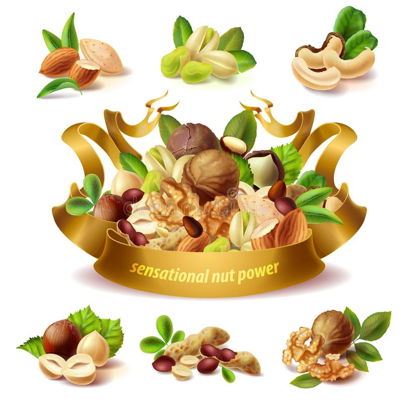 Download Vector 3d Realistic Set Of Different Nuts Stock Image - Image of background, banner: 111619775