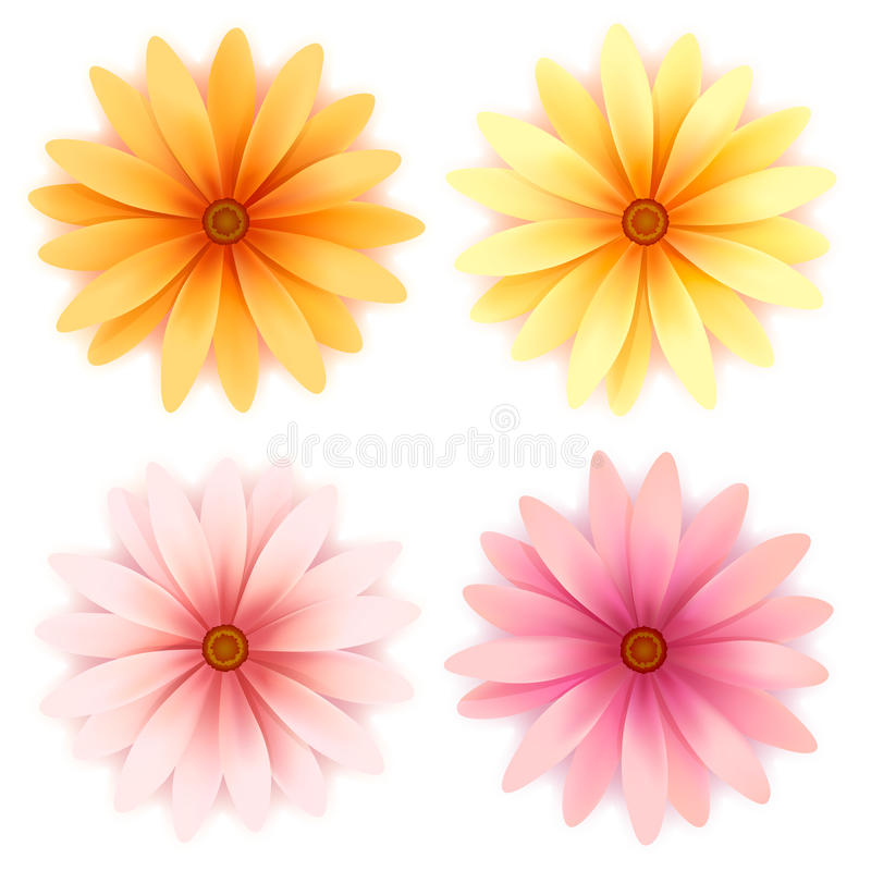 Vector daisy flowers set isolated on white vector illustration