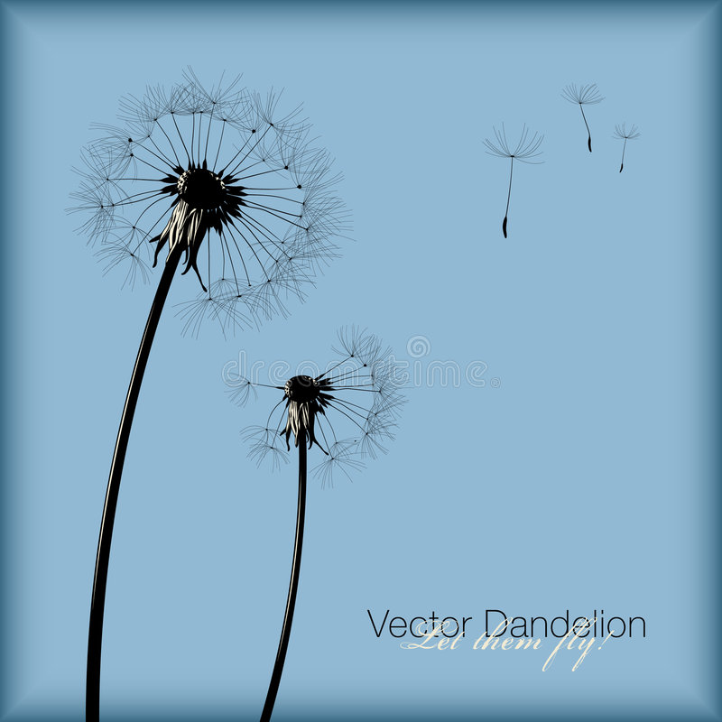 Vector dandelion royalty free stock photography