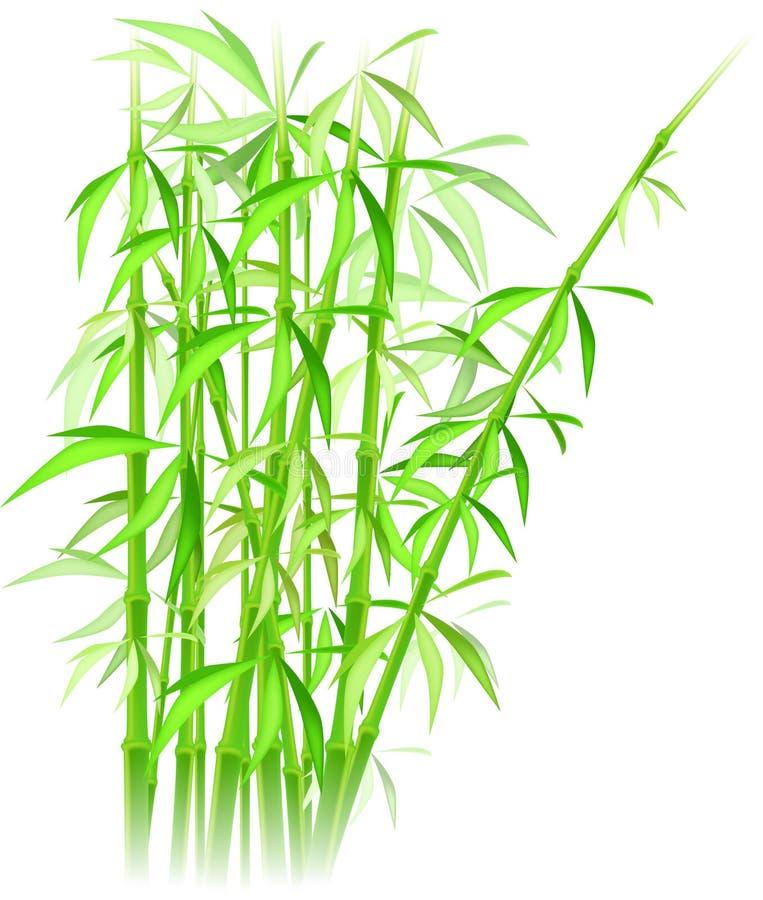 Vector de bambú ilustración del vector