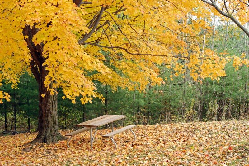 Vector de comida campestre bajo un árbol de arce amarillo hermoso imagenes de archivo