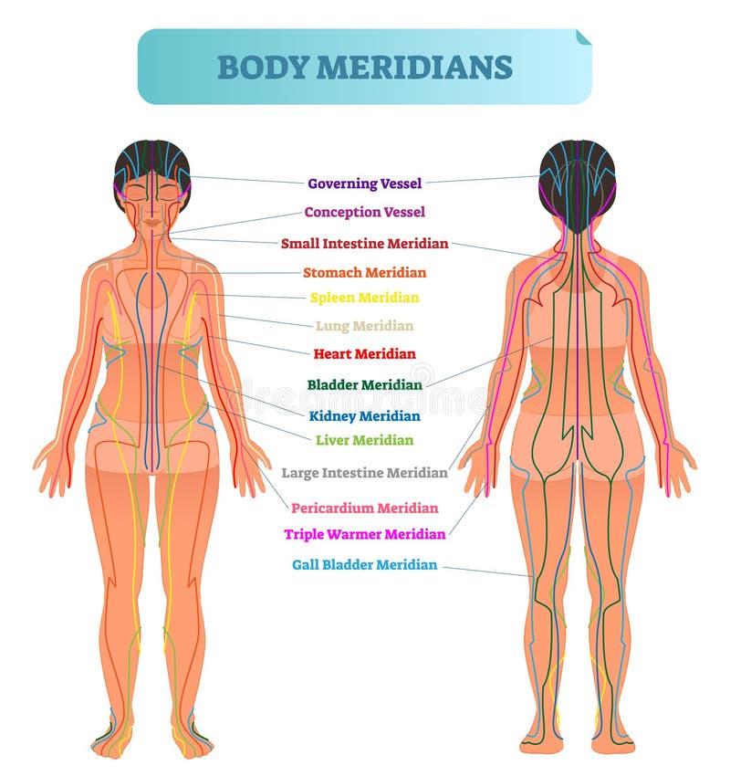 Vector de illustratieregeling van het lichaams hoogste systeem, de Chinese grafiek van het de therapiediagram van de energieacupu stock illustratie