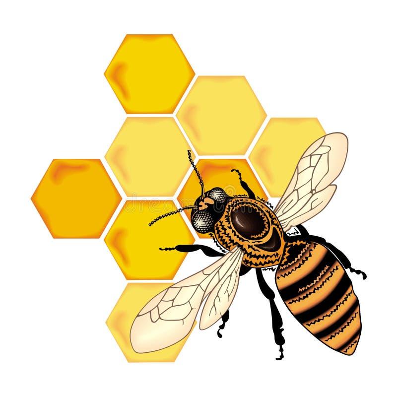 Vector de la abeja del color stock de ilustración