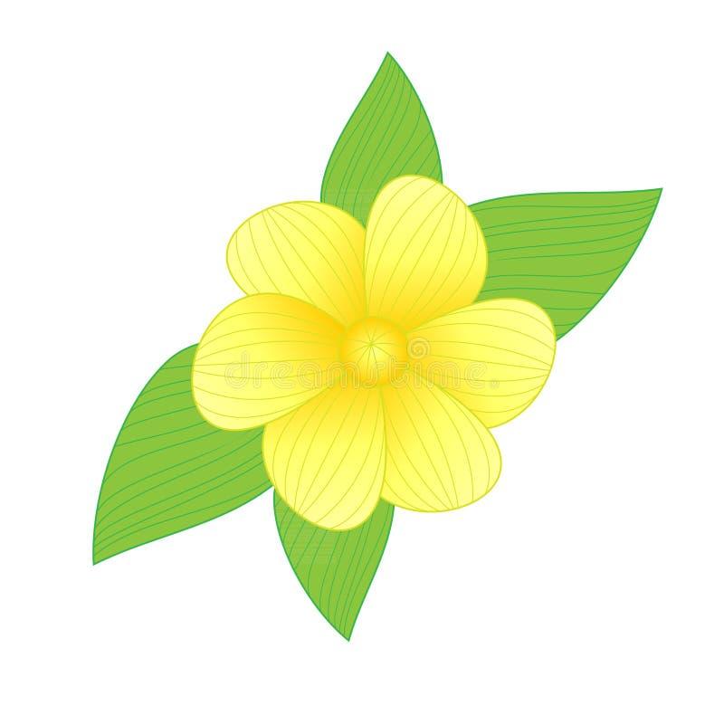Vector de la flor libre illustration