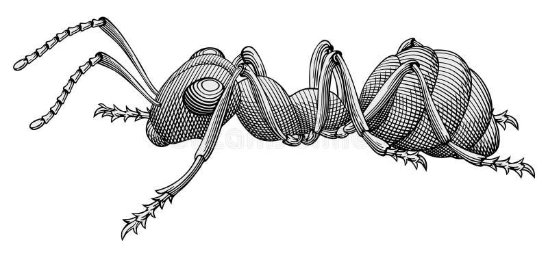 Vector de la hormiga stock de ilustración