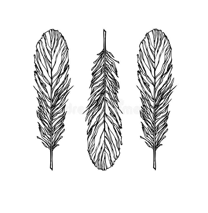 Download Vector De La Pluma Del Vintage Fijado - Ejemplo Bosquejo Ilustración del Vector - Ilustración de hermoso, cerradura: 41906952