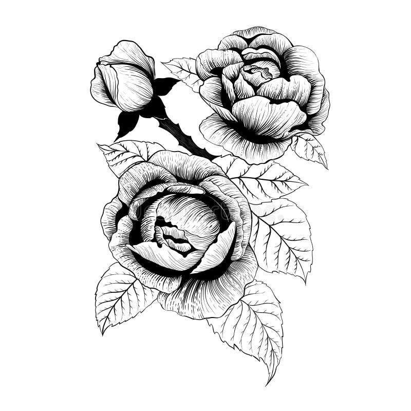 Vector de las flores Una rama de rosas con las hojas, las flores y los brotes Collage de flores y de hojas en el fondo blanco ilustración del vector