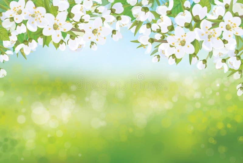 Vector de lente tot bloei komende boom op bokehachtergrond royalty-vrije illustratie