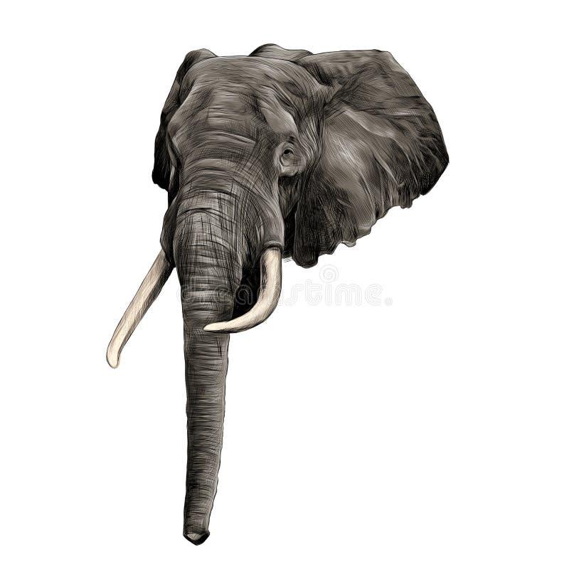 Vector de los gráficos del bosquejo del elefante libre illustration