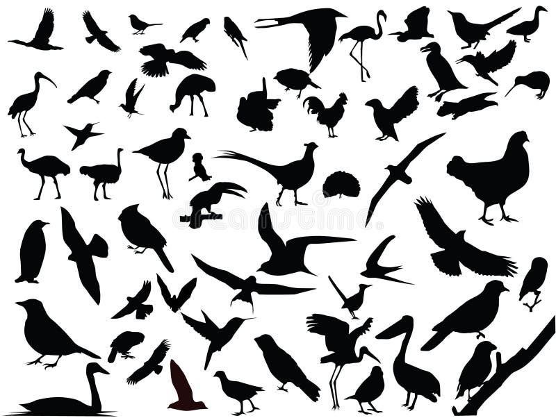 Vector de pájaros aislados libre illustration