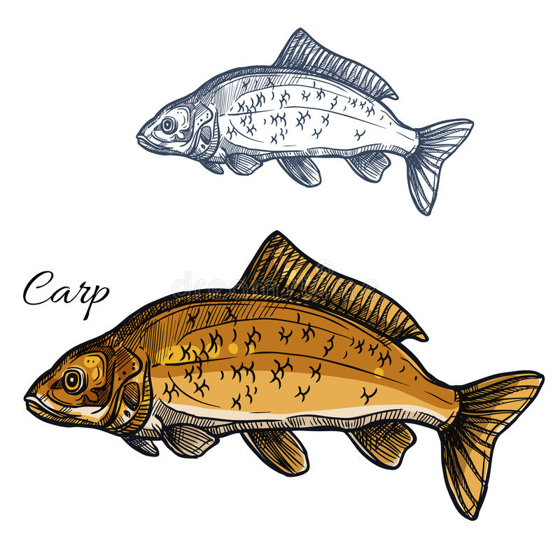Vector de schetspictogram van karpervissen stock illustratie
