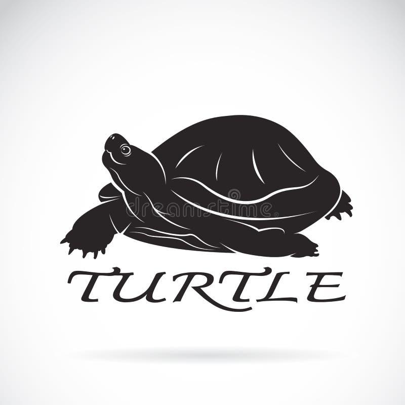 Vector de una tortuga en el fondo blanco stock de ilustración