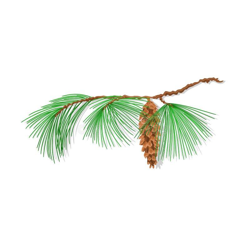 Vector del árbol de navidad del pino de la rama ilustración del vector