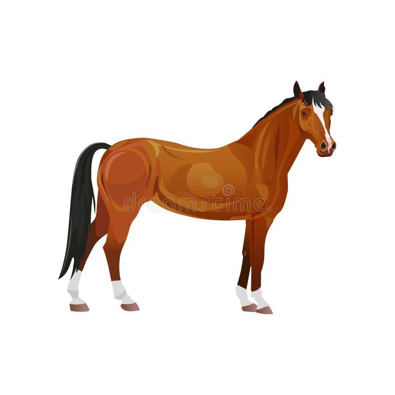 Vector del caballo de bahía stock de ilustración