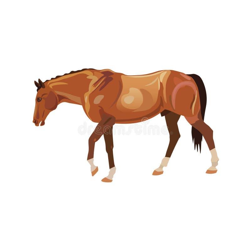 Vector del caballo que vaga stock de ilustración