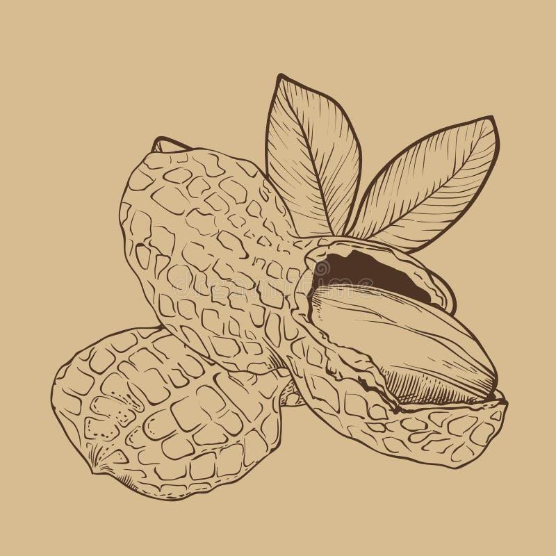 Vector del cacahuete en fondo marrón stock de ilustración