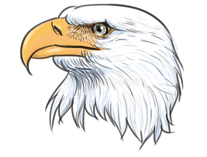 Vector del color de la cabeza del águila calva stock de ilustración