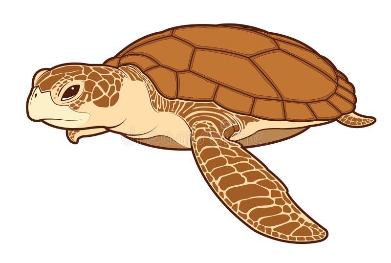 Vector del color de la tortuga de mar ilustración del vector