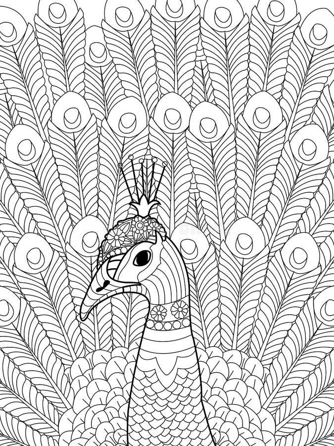 Vector del colorante del pavo real para los adultos libre illustration