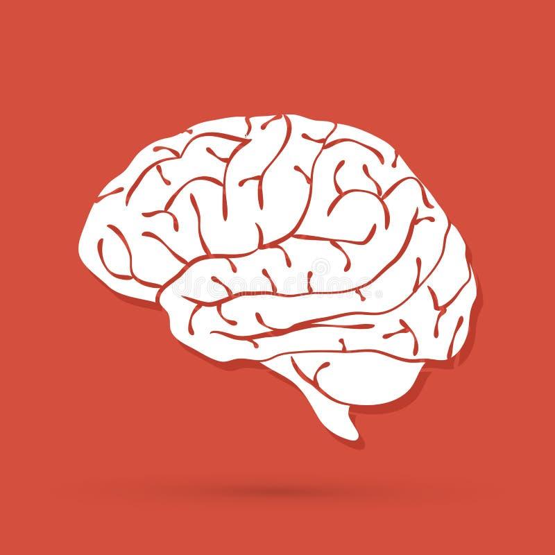 Vector del gráfico de la vista lateral del cerebro ilustración del vector