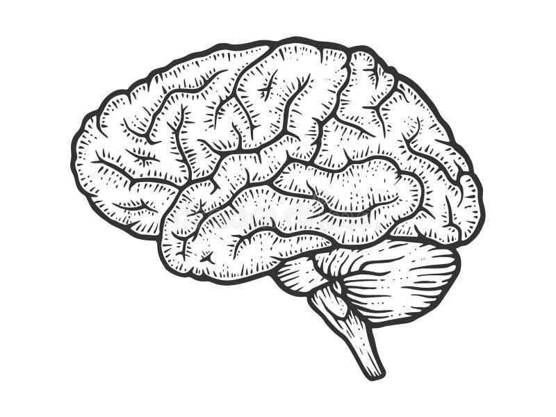 Vector del grabado del bosquejo del cerebro humano stock de ilustración