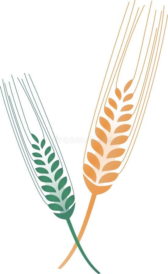 Vector del grano libre illustration