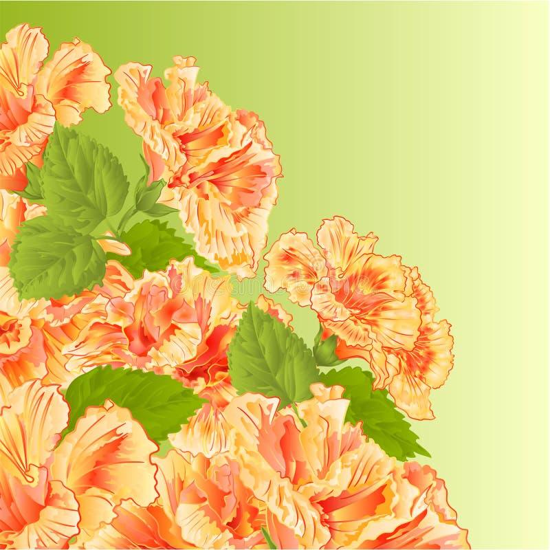 Vector del hibisco del amarillo del arbusto floreciente libre illustration