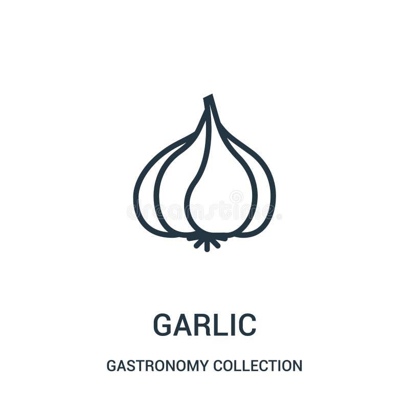 vector del icono del ajo de la colección de la colección de la gastronomía Línea fina ejemplo del vector del icono del esquema de libre illustration