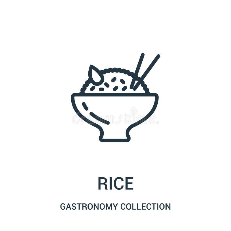 vector del icono del arroz de la colección de la colección de la gastronomía L?nea fina ejemplo del vector del icono del esquema  ilustración del vector