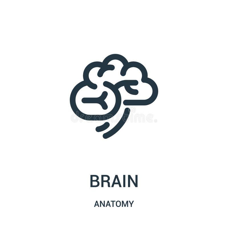vector del icono del cerebro de la colección de la anatomía Línea fina ejemplo del vector del icono del esquema del cerebro Símbo libre illustration