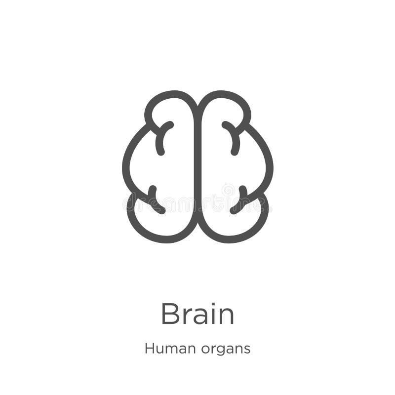 vector del icono del cerebro de la colecci?n de los ?rganos humanos L?nea fina ejemplo del vector del icono del esquema del cereb libre illustration