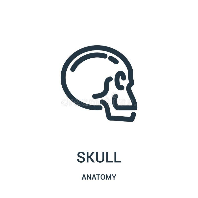 vector del icono del cráneo de la colección de la anatomía Línea fina ejemplo del vector del icono del esquema del cráneo Símbolo libre illustration