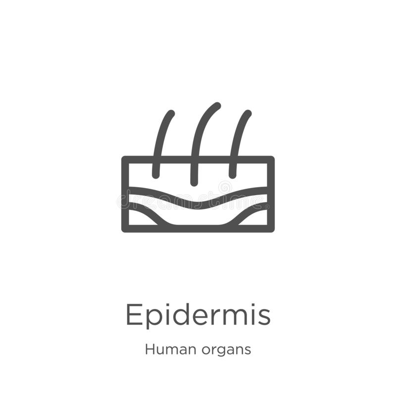 vector del icono de la epidermis de la colecci?n de los ?rganos humanos L?nea fina ejemplo del vector del icono del esquema de la ilustración del vector