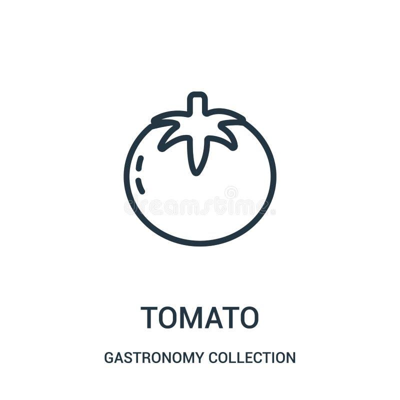 vector del icono del tomate de la colección de la colección de la gastronomía Línea fina ejemplo del vector del icono del esquema stock de ilustración