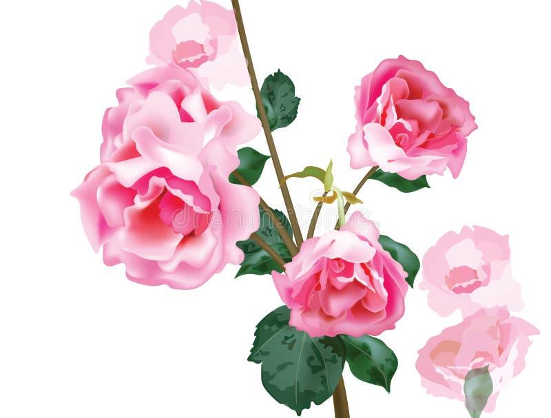 Vector del ramo de las rosas del vintage de la acuarela Decoración rosada floral para la tarjeta de felicitación, la invitación,  stock de ilustración