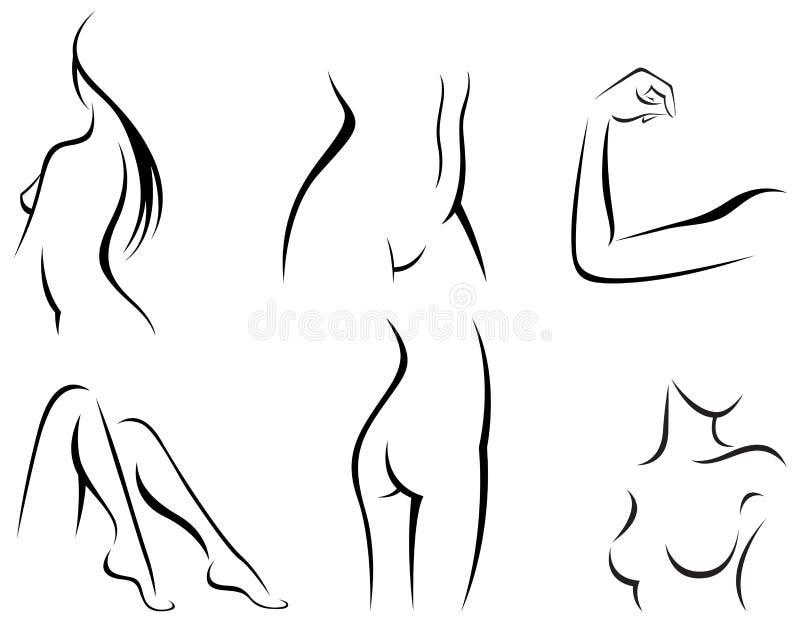 Vector Del Sistema De Partes Del Cuerpo Femeninas Estilizadas ...
