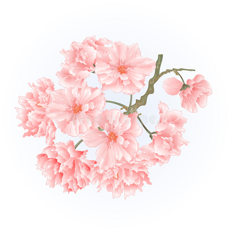Vector del vintage de los flores de Sakura del árbol de la ramita stock de ilustración