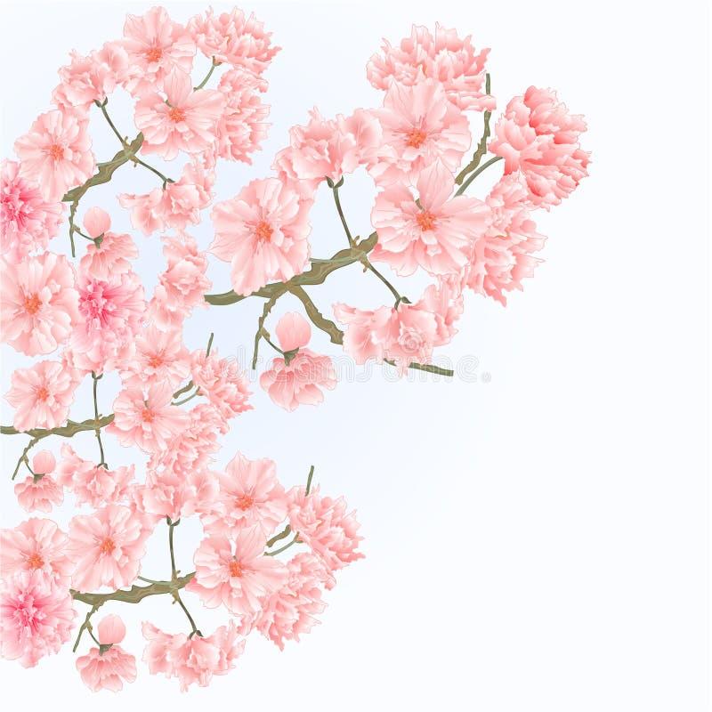 Vector del vintage de los flores de Sakura del árbol de las ramitas stock de ilustración
