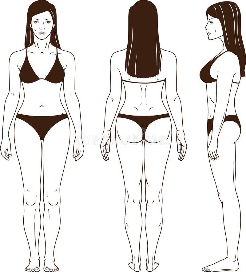 Vector derecho descubierto de la mujer stock de ilustración