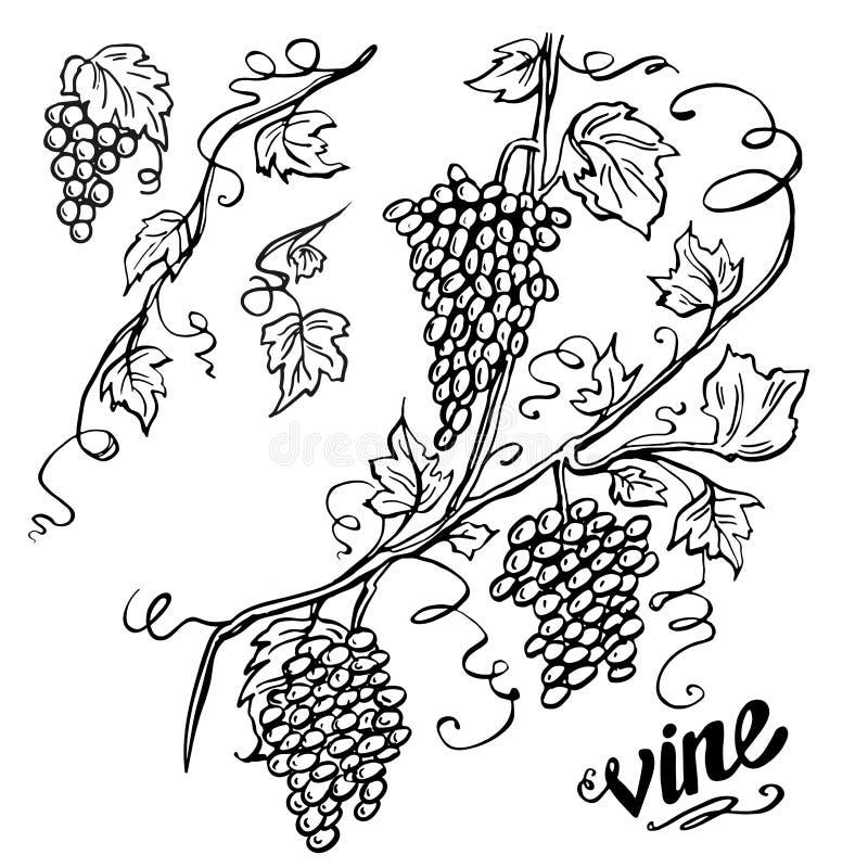 Vector design element, beautiful fancy curls leaves vines and swirls paragraph divider or underline illustration stock illustration