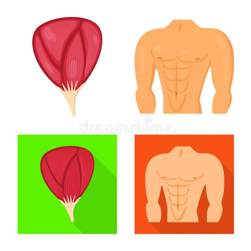 Vector design of fiber and muscular icon. Collection of fiber and body stock symbol for web. Vector illustration of fiber and muscular symbol. Set of fiber and vector illustration
