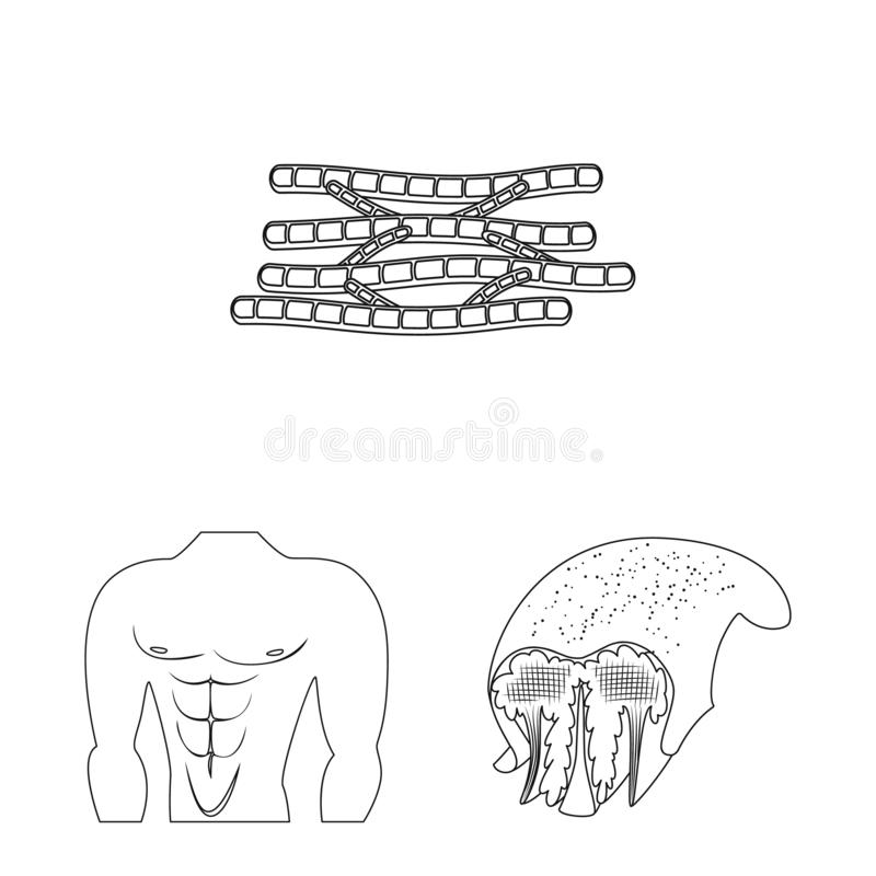 Vector design of fiber and muscular icon. Set of fiber and body stock vector illustration. Vector illustration of fiber and muscular symbol. Collection of fiber royalty free illustration