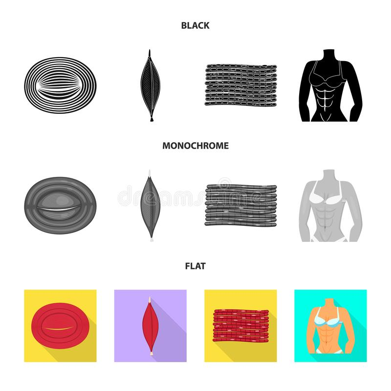 Vector design of fiber and muscular icon. Set of fiber and body vector icon for stock. Vector illustration of fiber and muscular symbol. Collection of fiber and stock illustration